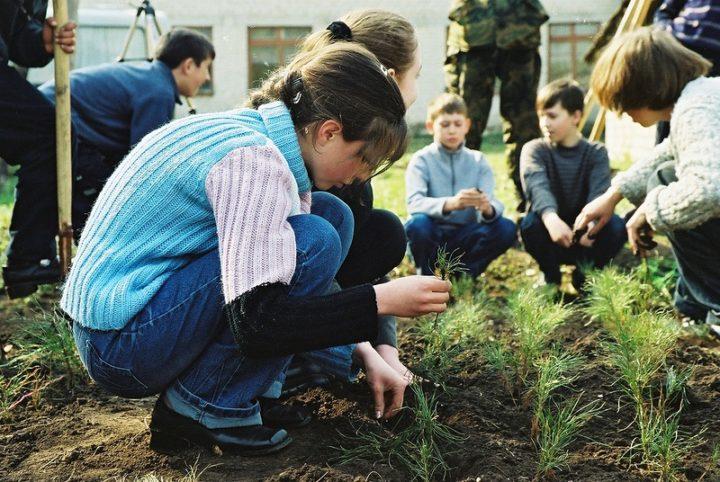 Школка для хвойных (с) http://www.forestforum.ru