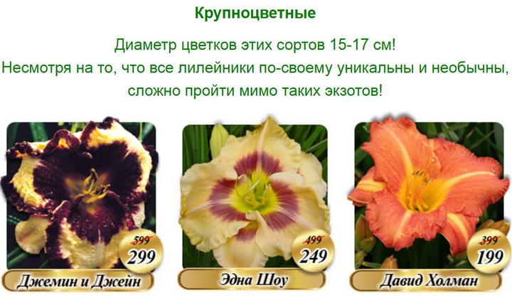 Фрагмент письма со скидкой / (с) Русский огород 2018