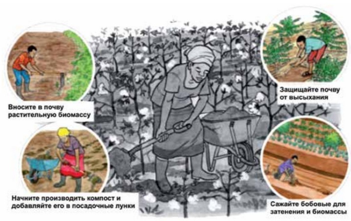 Основы органического земледелия: Вносите в почву растительную биомассу; Начните производить компост и добавляйте его в посадочные лунки; Защищайте почву от высыхания; Сажайте бобовые для затенения и биомасссы;